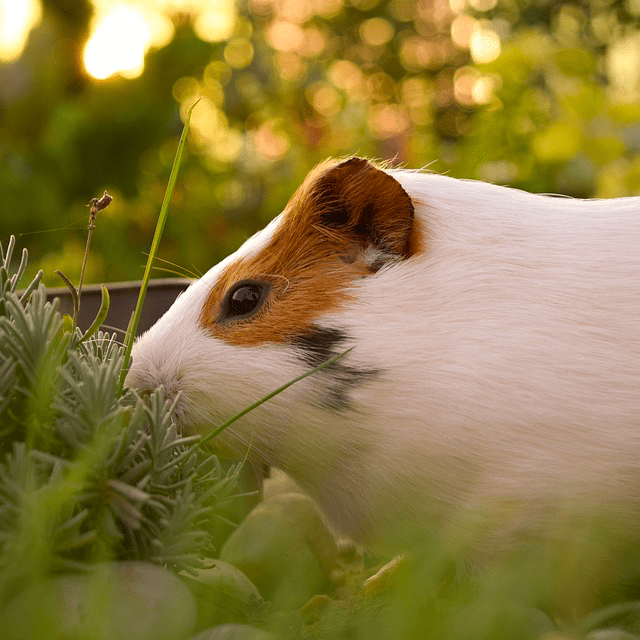 Keeping your small animals cool this summer