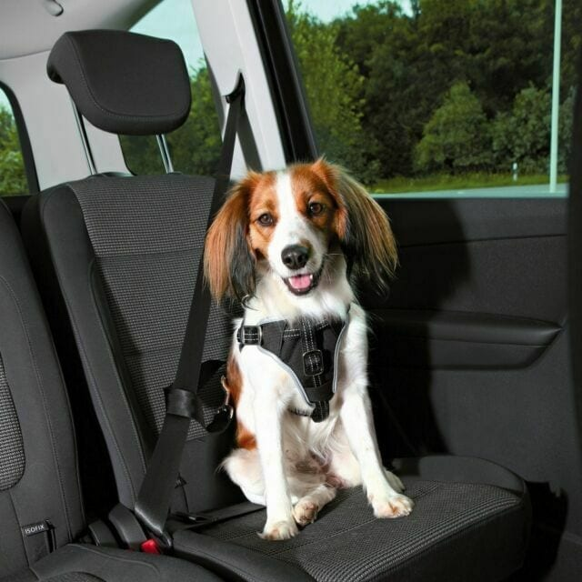 Car Journeys with Pets