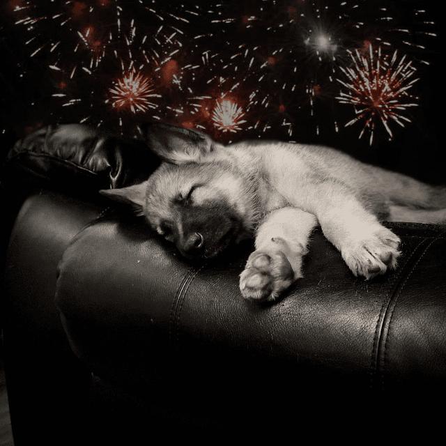Things to remember this firework season