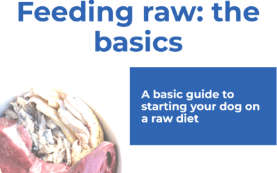 Guide to starting a raw diet for dogs