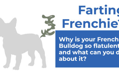 Frenchie that keeps on farting? Here's why and what you can do about it!