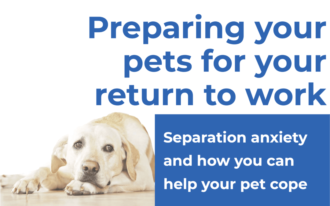 Preparing your pets for your return to work