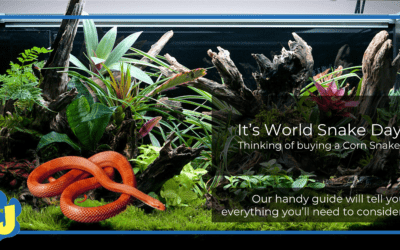 What should I consider before buying a corn snake?
