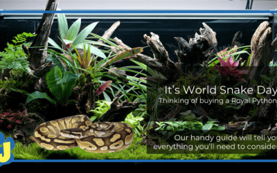 What should I consider before buying a Royal Python?